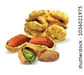 fresh walnut  nutritious... | Shutterstock .eps vector #1036021975