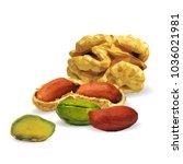 fresh walnut  nutritious... | Shutterstock .eps vector #1036021981