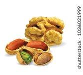 fresh walnut  nutritious... | Shutterstock .eps vector #1036021999