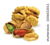 fresh walnut  nutritious... | Shutterstock .eps vector #1036022011