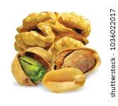 fresh walnut  nutritious... | Shutterstock .eps vector #1036022017