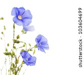 Beautiful Flowers Of Flax...