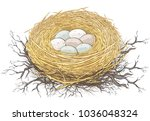 natural nest of bird with small ... | Shutterstock .eps vector #1036048324