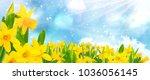 Blue Sky  Sunshine  Daffodils ...