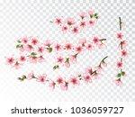 pink sakura branches set vector ... | Shutterstock .eps vector #1036059727