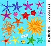 sea stars set. multicolored... | Shutterstock .eps vector #1036061581