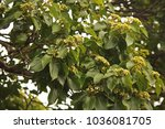 Flowers And Foliage Of A...