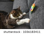 Stock photo cute cat playing with toy at home 1036183411