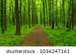 green forest and wood path | Shutterstock . vector #1036247161
