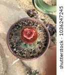 Small photo of Cactus Mammillaria marksiana