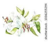 watercolor set of white lilies  ... | Shutterstock . vector #1036255294