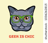 muzzle of gray cat wearing in... | Shutterstock .eps vector #1036262815