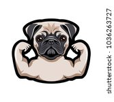 pug dog with muscles. vector... | Shutterstock .eps vector #1036263727