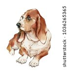 Hand Drawn Painting Of Basset...
