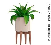 3d illustration agave | Shutterstock . vector #1036274887
