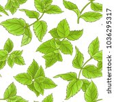 peppermint vector pattern | Shutterstock .eps vector #1036295317