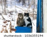 Stock photo portrait of two funny cute cat sitting outside on a sunny spring day 1036355194