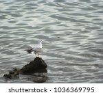 Seagull Portrait Against Sea...