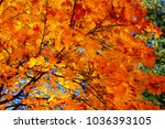 Small photo of yellow, maple leaves, against the background of the blue autumn sky, quietly rustle in the wind.