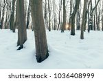 sunset in the forest | Shutterstock . vector #1036408999