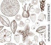 herbal tea. vector seamless... | Shutterstock .eps vector #1036419967