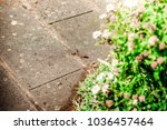 lizard sitting on brown stone... | Shutterstock . vector #1036457464