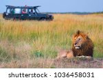 male lion with safari vehicle | Shutterstock . vector #1036458031