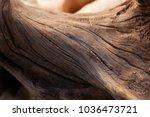Bonsai Trunk Close Up  Wood...