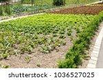 Farm Vegetable Kitchen Garden...