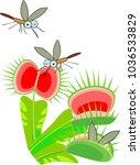 venus flytrap or dionaea... | Shutterstock .eps vector #1036533829