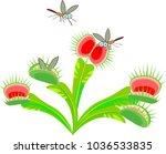 venus flytrap or dionaea... | Shutterstock .eps vector #1036533835