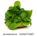 spinach vegetables isolated on... | Shutterstock . vector #1036574287