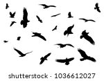 silhouetted osprey birds on... | Shutterstock . vector #1036612027