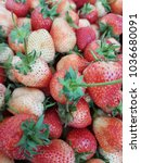 fresh strawberries from the... | Shutterstock . vector #1036680091