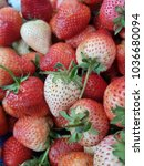 fresh strawberries from the... | Shutterstock . vector #1036680094