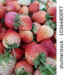 fresh strawberries from the... | Shutterstock . vector #1036680097