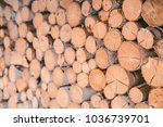 firewood for the winter  stacks ... | Shutterstock . vector #1036739701