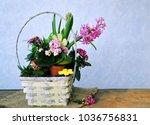 spring garden  flowers on...   Shutterstock . vector #1036756831