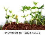 saplings growing from soil ...   Shutterstock . vector #103676111