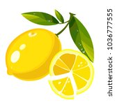 lemon with leaves on a white... | Shutterstock .eps vector #1036777555