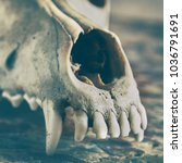 Small photo of Dog scull without lower jaw on shabby wooden surface