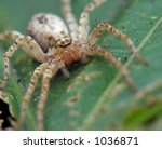 big spider | Shutterstock . vector #1036871