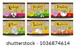 set colorful food labels ... | Shutterstock .eps vector #1036874614