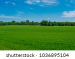 field at the edge of the... | Shutterstock . vector #1036895104
