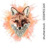 red fox   stylized vector art   ... | Shutterstock .eps vector #1036901164