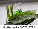 science research leaves of... | Shutterstock . vector #1037012779