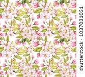apple flowers hand drawn... | Shutterstock . vector #1037031031