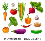 set of vegetebles  handrawn... | Shutterstock .eps vector #1037031547