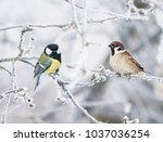 Two Funny Curious Little Bird...