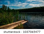 picturesque forest and the... | Shutterstock . vector #1037065477